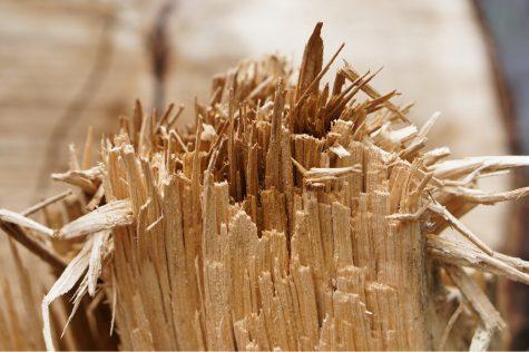 破断した木材